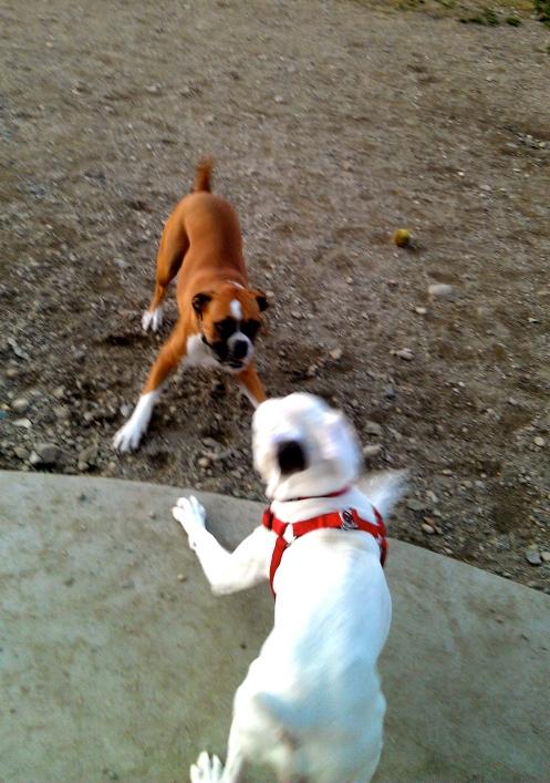 Gotta Love Boxers